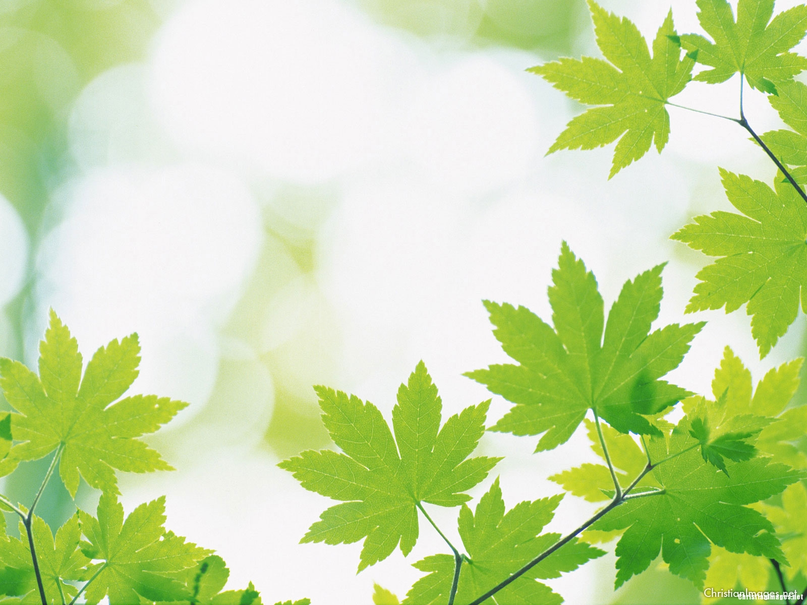 leaves powerpoint background � christian images
